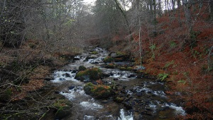 Birks of Aberfeldy Walk